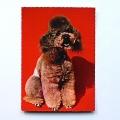 Hondenkaart 2